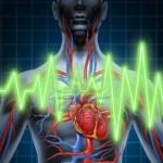 kardiovaskularni sustav